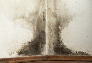 It is very important to detect and remove mold as quickly as possible. ERS provides mold restoration services to homes and businesses.