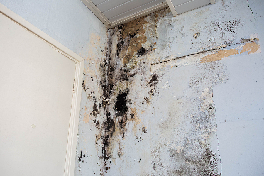 Mold on a wall from flood damage